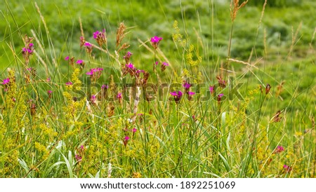 Summer background with bright wildflowers among the tall grass stock photo