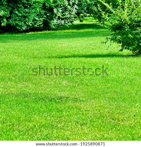 Summer Backyard Garden or Park Shady Fresh Lawn Green Background Or Texture. Lawn Made From Turf Or Sod. Focus Selective. Сток-фото ©