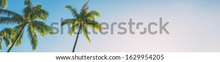 Summer beach background palm trees against blue sky banner panorama, tropical Caribbean travel destination. Foto stock ©