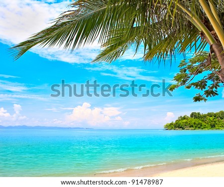 White Sand Beach Palm Tree Summer Beach Palm Tree