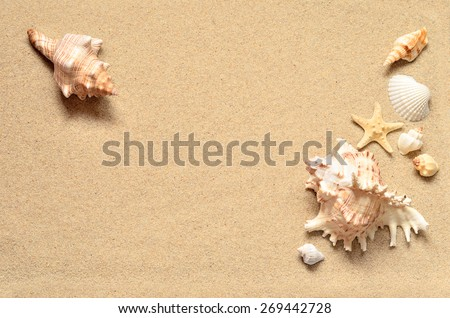 Summer beach. Seashell on the sand.