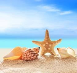 Summer beach. Seashells on a sand and ocean as background.