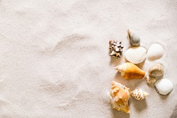 Summer beach with a lot of seashells, starfish and sand as background. Sea shells. Travel and summer concept.