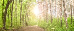 Summer beautiful fresh green deciduous forest with a trail . Panorama.
