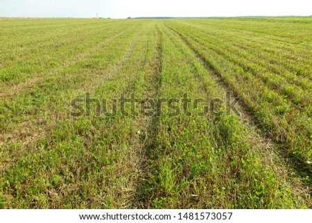 Summer. Beveled yellow wheat field. The beveled rye field. Field after harvest #1481573057