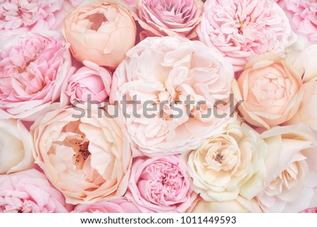 Summer blossoming delicate roses on blooming flowers festive background, pastel and soft bouquet floral card #1011449593