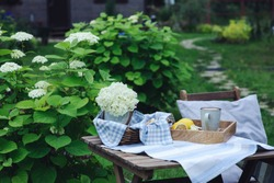 Summer breakfast in beautiful blooming garden with tea, lemon and cookies. Enjoying summertime outdoor.