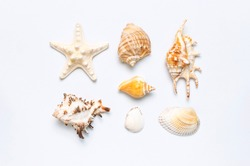 Summer concept, marine background. Different seashells and starfish on light background. Top view, flat lay, copy space. Sea summer vacation background. Travel, marine souvenir