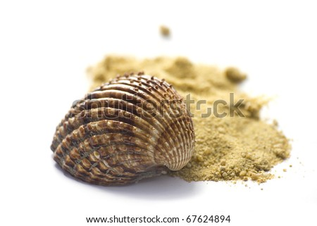 Summer concept : shell and sand isolated on white