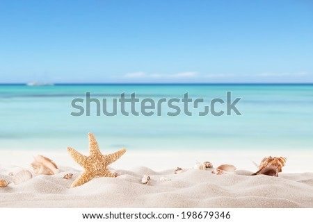 Summer concept with sandy beach, shells and starfish. #198679346