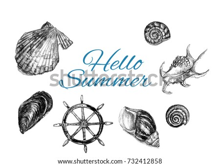 Summer concept with shells. Hand drawn watercolor painting on white background