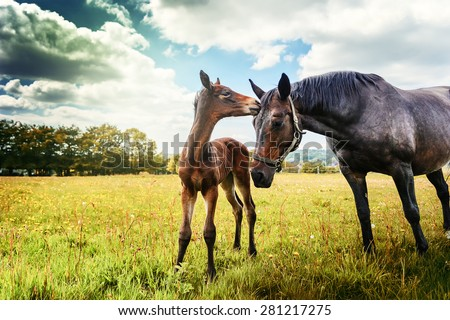 Summer country landscape with horse and foal