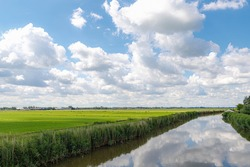Summer countryside landscape with flat and low land under blue sky, Typical Dutch polder and water land with green meadow, Small canal or ditch on the field along the road, Noord Holland, Netherlands.