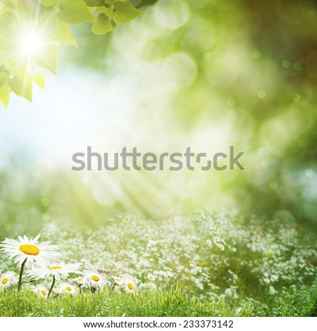 Summer day on the meadow, environmental backgrounds with daisy flowers - Shutterstock ID 233373142