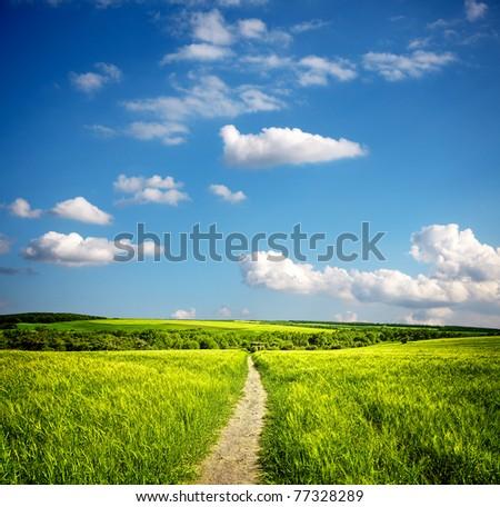 Summer ecology landscape