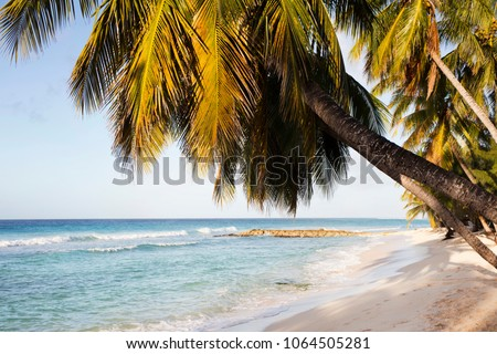 Summer. Exotic vacations. Palm trees. Turquoise water. Sunny blue sky. Beautiful white-sand beach.  #1064505281