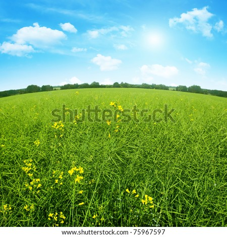 Summer field and blue sky with sun .