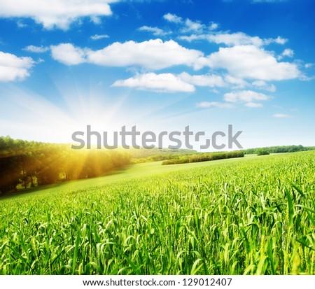 Summer field and sunlight in blue sky.