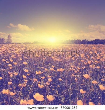 summer field during sunset in...