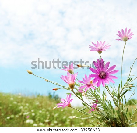 Summer field flowers