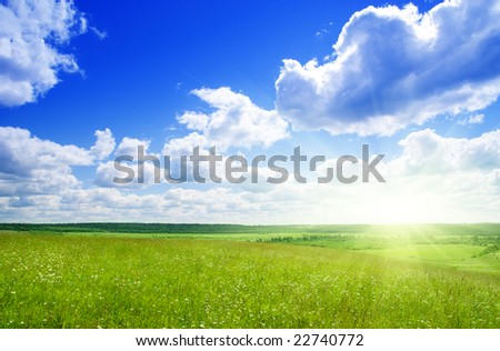 summer field of grass and flowers