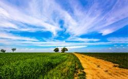 Summer field road landscape. Rural road in summer. Country road horizon landscape. Summer rural road view