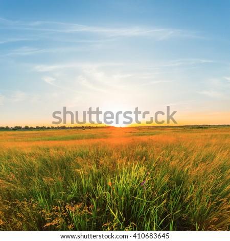 summer field scene at the sunset #410683645
