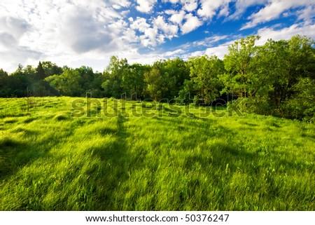 Summer field under blue sky