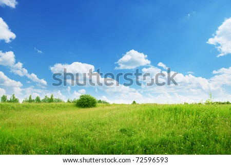 Summer field under blue sky.