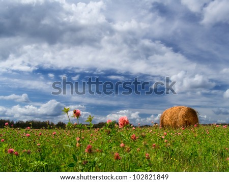 Summer field with a clover and a haystack.