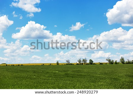 Summer field with cumulus clouds and blue sky #248920279
