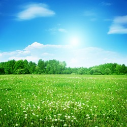 Summer field with dandelions and sun in blue sky.
