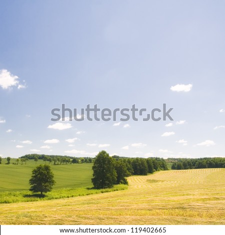 summer fields and beautiful blue sky with white clouds landscape