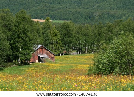 Summer fields and old barn