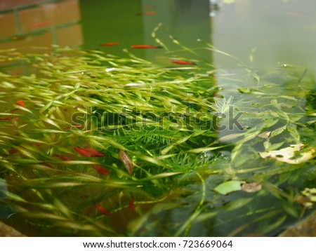 Summer fish pond #723669064