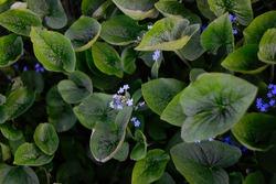 summer flora green flower flora