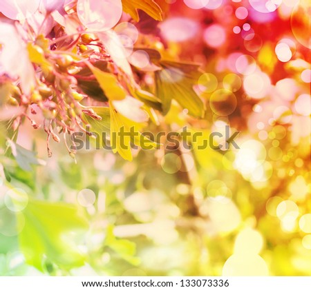 Summer floral background  with sun blur/ Spring background in red and Yellow colors