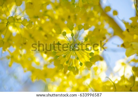 summer flower #633996587