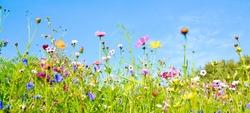Summer flower meadow - floral background banner