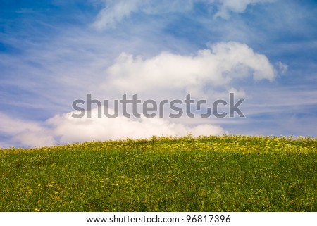 Summer flowering meadow under blue sky with fluffy clouds