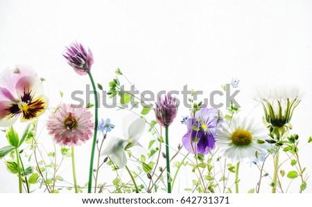 summer flowers #642731371