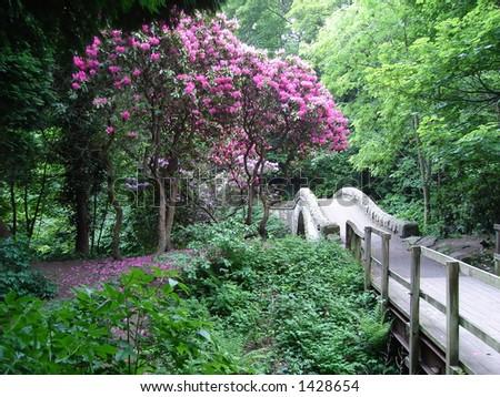 Summer Flowers and Old Stone Bridge in Jesmond Dene England