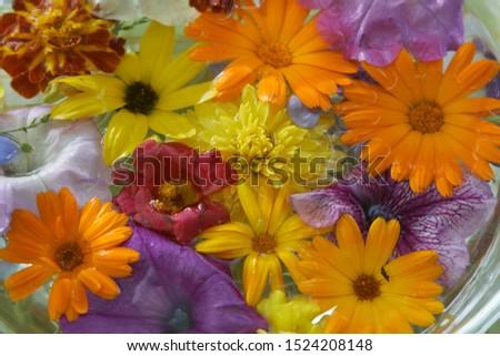 summer flowers, fresh flowers,flowers calendula flowers