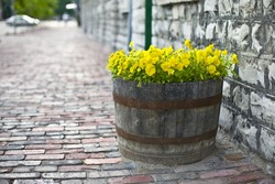 Summer flowers in a wooden barrel. Selective focus, shallow DoF
