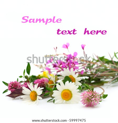Summer flowers isolated on white with copy space