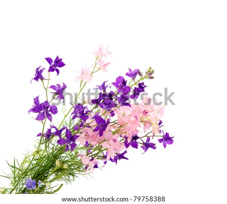 Summer flowers on a white background ez canvas summer flowers on a white background mightylinksfo