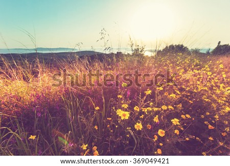 Summer flowers on the  meadow