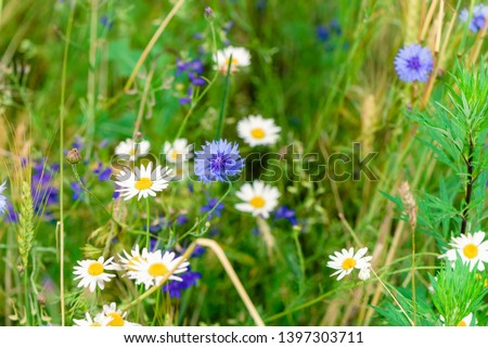 Summer flowers on the meadow. Wildflower meadow, flower meadow, wildflowers #1397303711