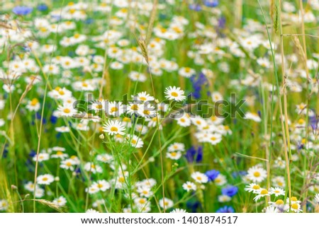 Summer flowers on the meadow. Wildflower meadow, flower meadow, wildflowers #1401874517