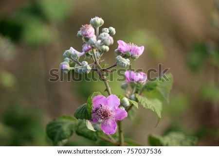 Summer flowers wild shrubs with pink flowers ez canvas summer flowers wild shrubs with pink flowers mightylinksfo